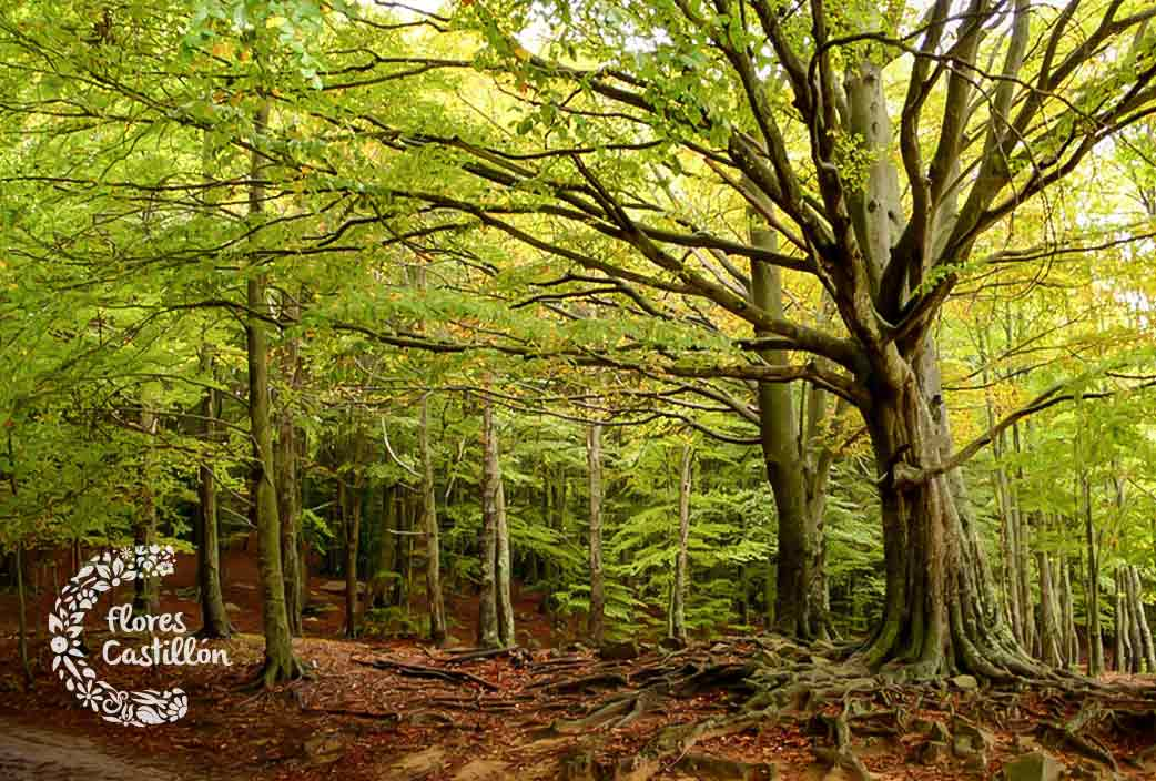 parque natural otoño montseny