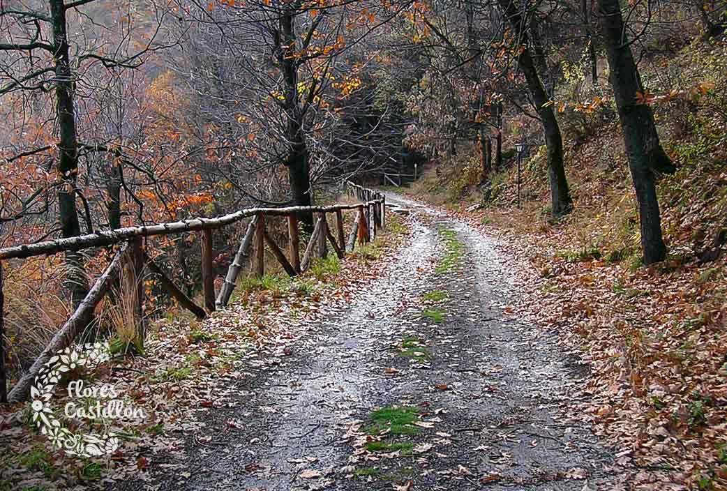 sierra-nevada-otoño