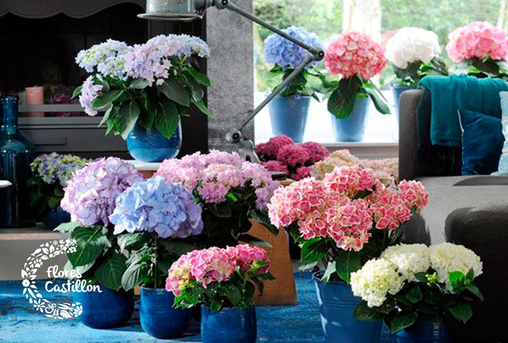 Las hortensias Descubre todo acerca de sus cuidados y poda Flores
