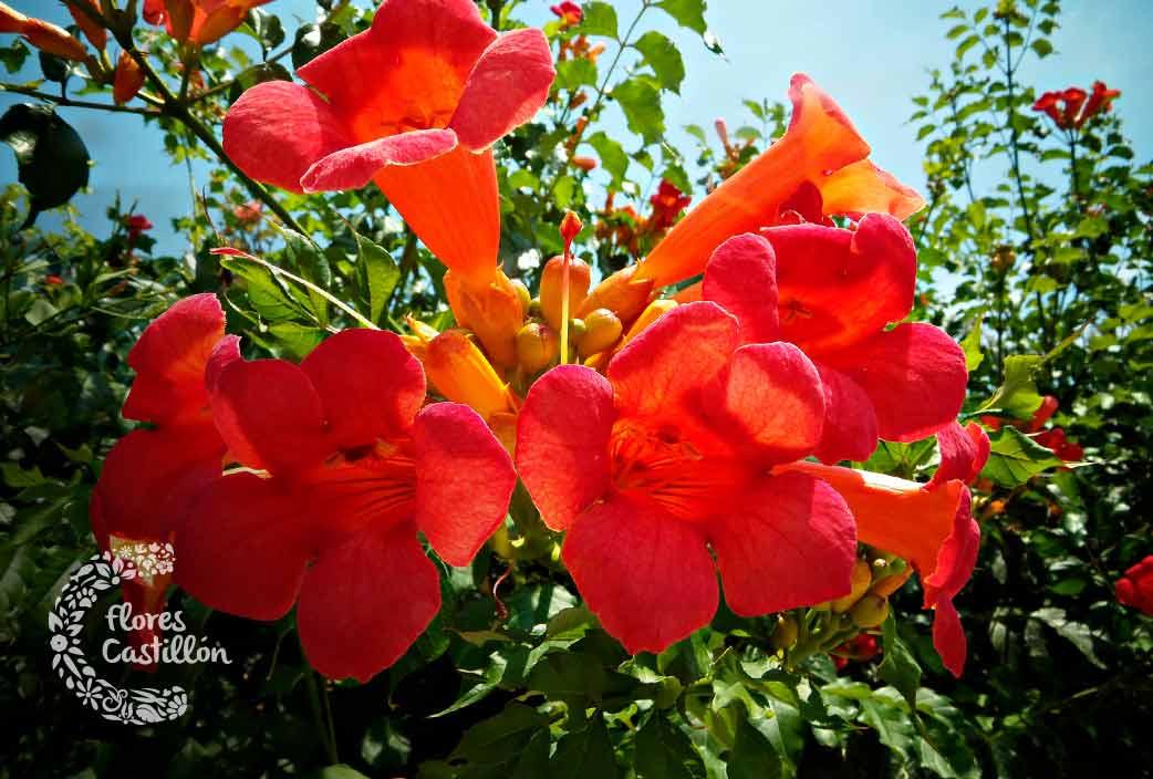 flor exotica y rara con forma de campana