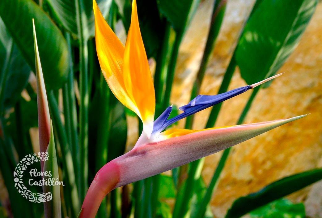flor más exótica del mundo