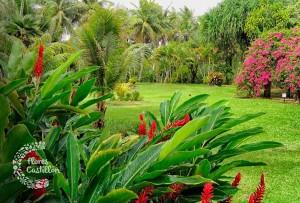 como hacer y decorar un jardin tropical