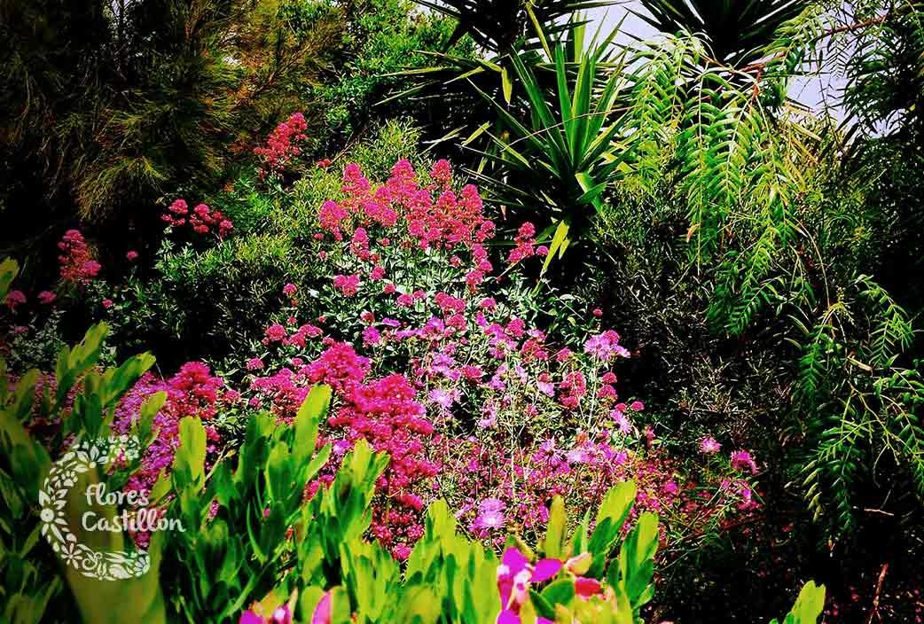 5 Ideas Para Disfrutar De Un Jardín Tropical En Tu Hogar