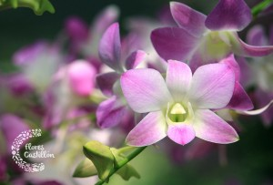 flor preciosa de orquidea