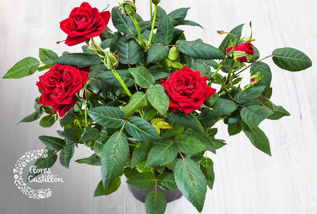 Descubre las flores más bonitas. ¡Te dejarán sin habla! - Flores ...