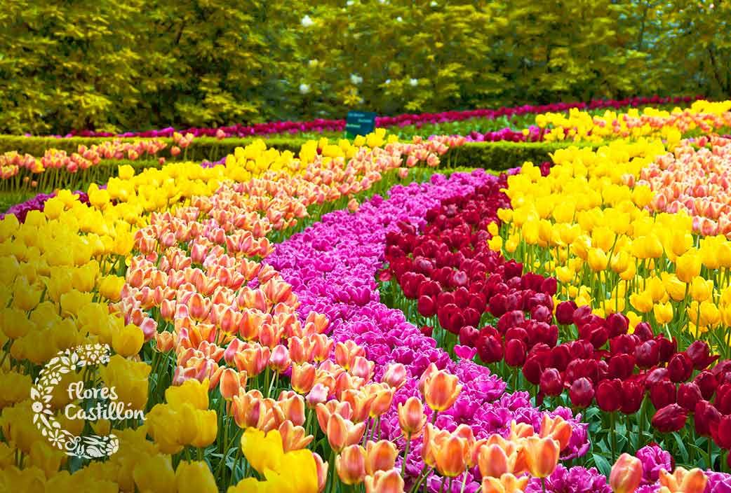 Descubre las flores m s bonitas te dejar n sin habla - Fotos de flores bonitas ...