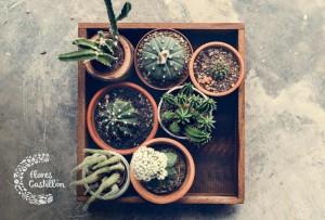 variedades de cactus para jardin