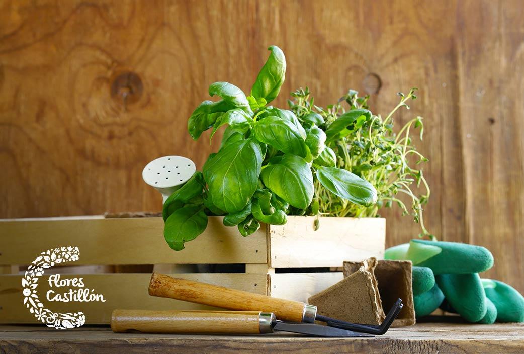 fallos de trasplante de plantas