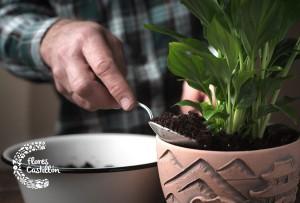 como trasplantar plantas