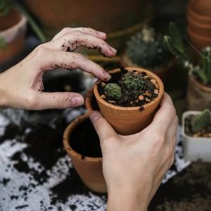 errores al trasplantar plantas y flores