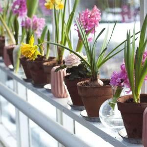 protege plantas frio