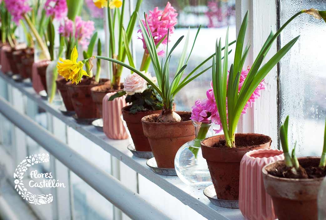 cuidar plantas invierno