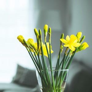 plantas para hogares con poca luz