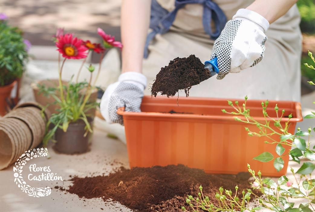cuando deben trasplantarse las plantas