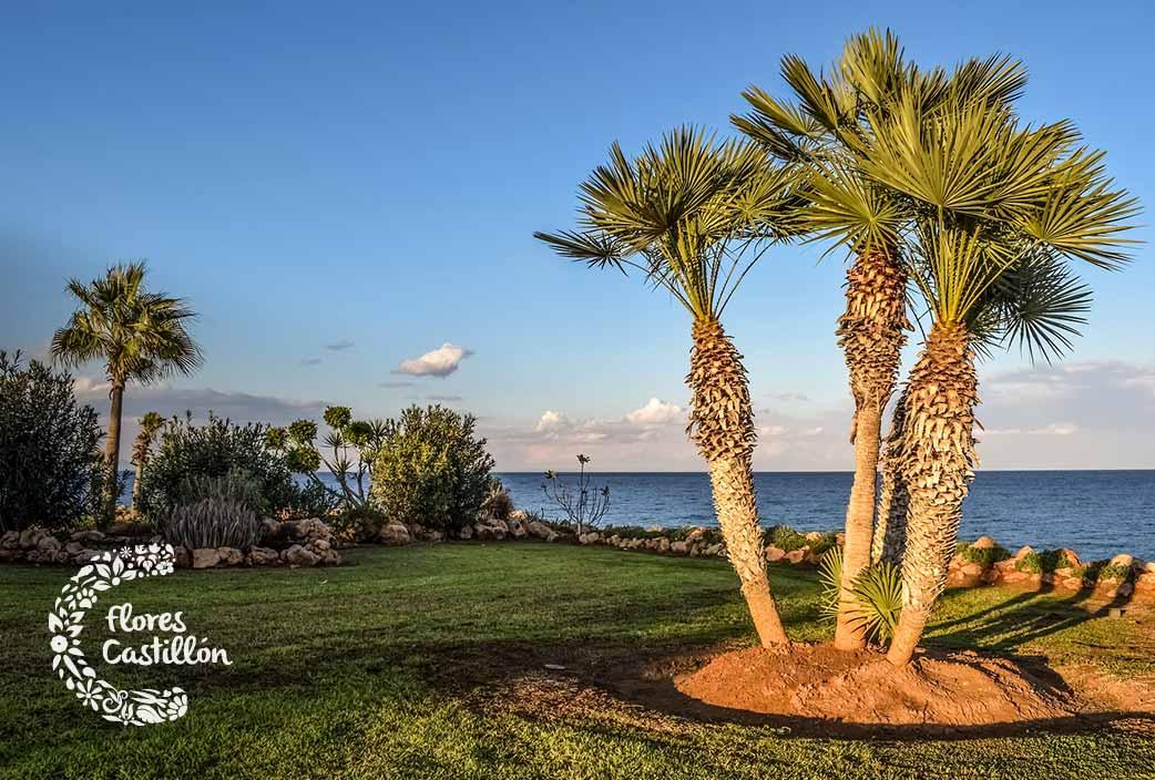 consejos para plantar una palmera en el jardin