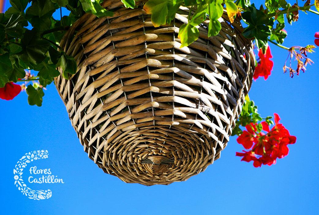 Planta perenne colgante de exterior