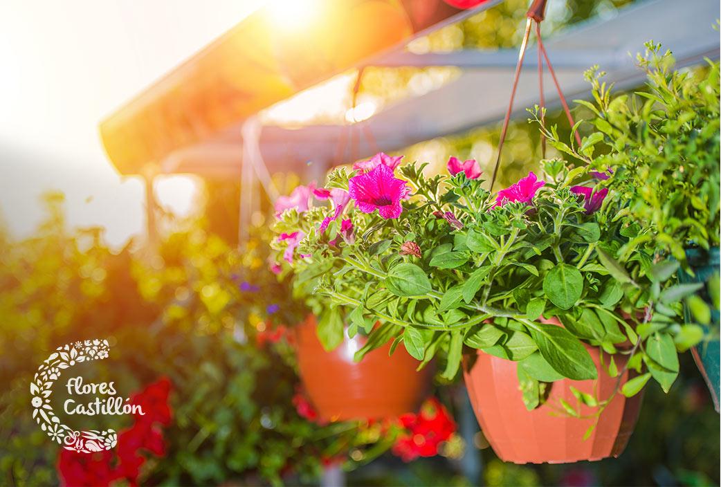 que plantas colgantes colocar en la terraza