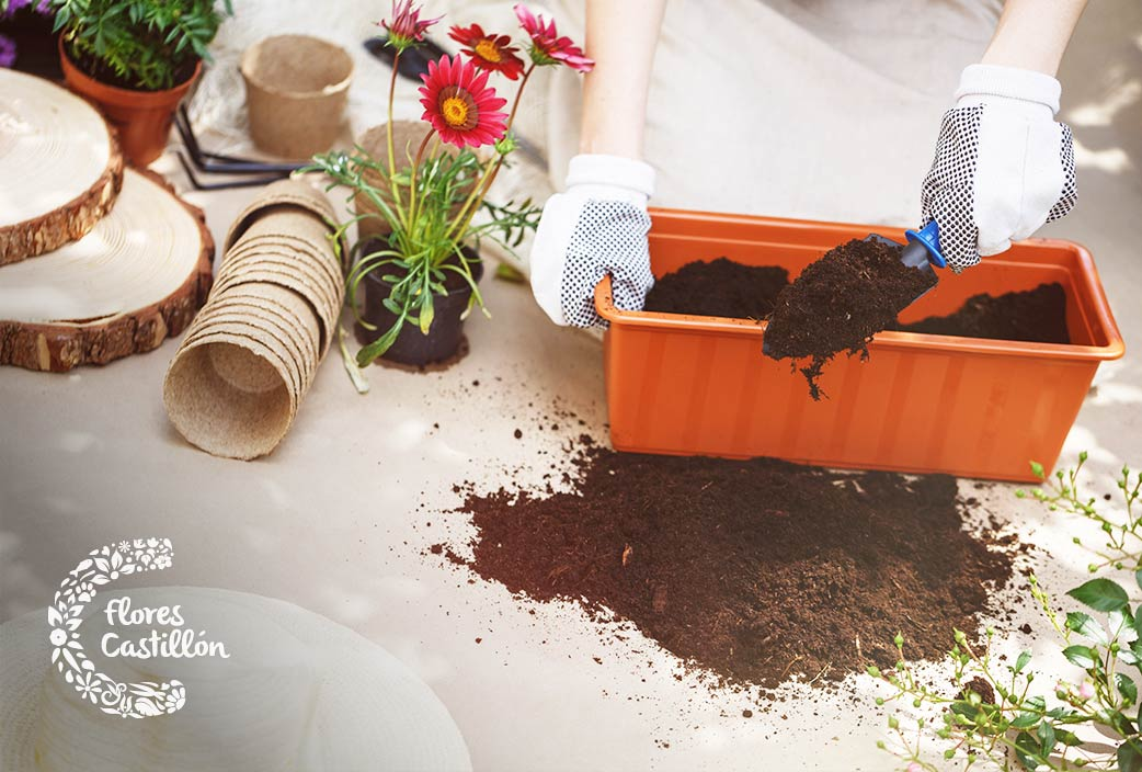 que fertilizante escoger para las plantas
