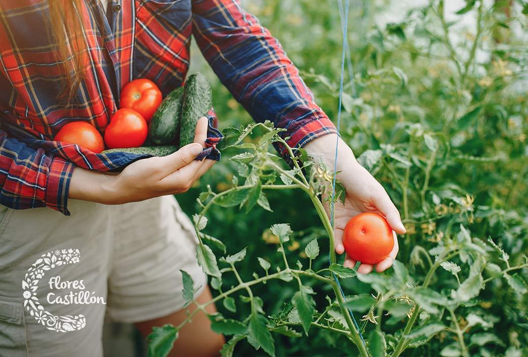 que plantar en tu huerto