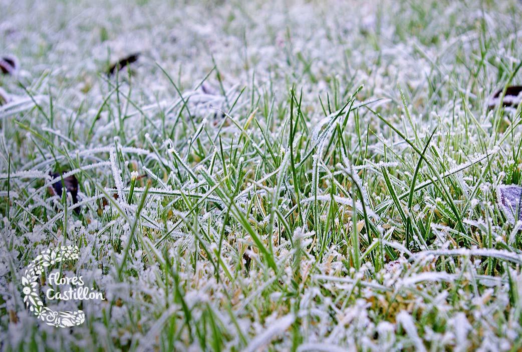 consejos basicos para cuidar el cesped en invierno