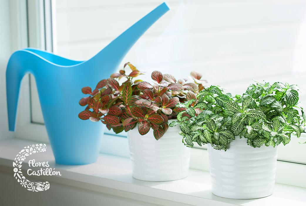 que hacer con las plantas de interior en invierno