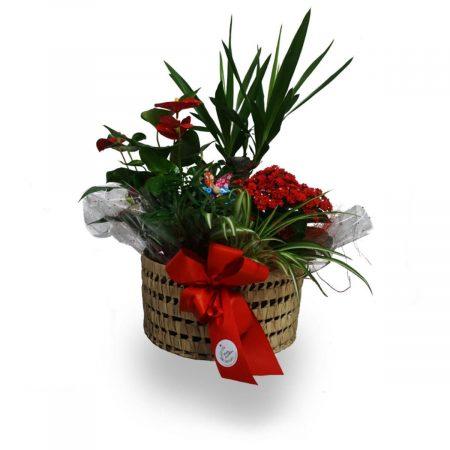 cesta de plantas para regalar