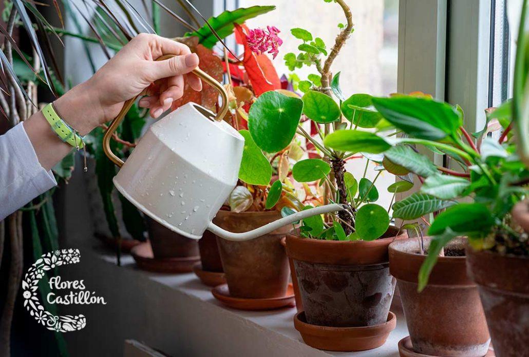 cuales son los errores mas comunes al cuidar plantas