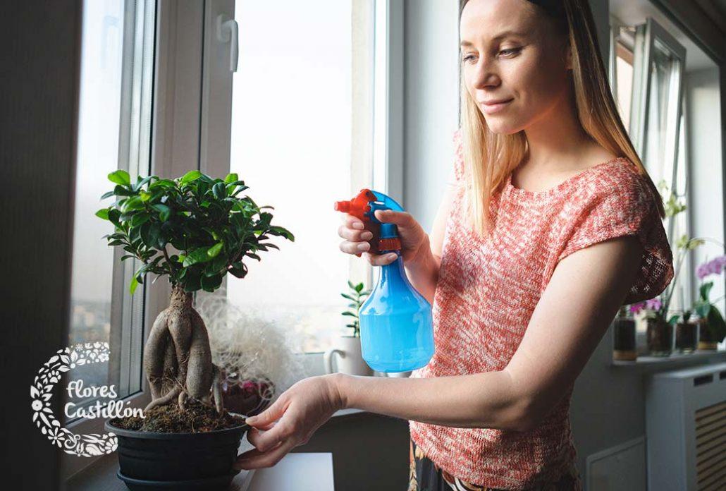 tipos de bonsais de interior