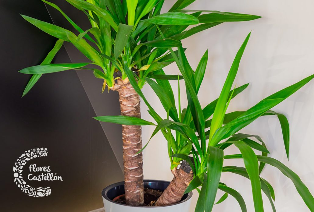 planta purificadora de aire