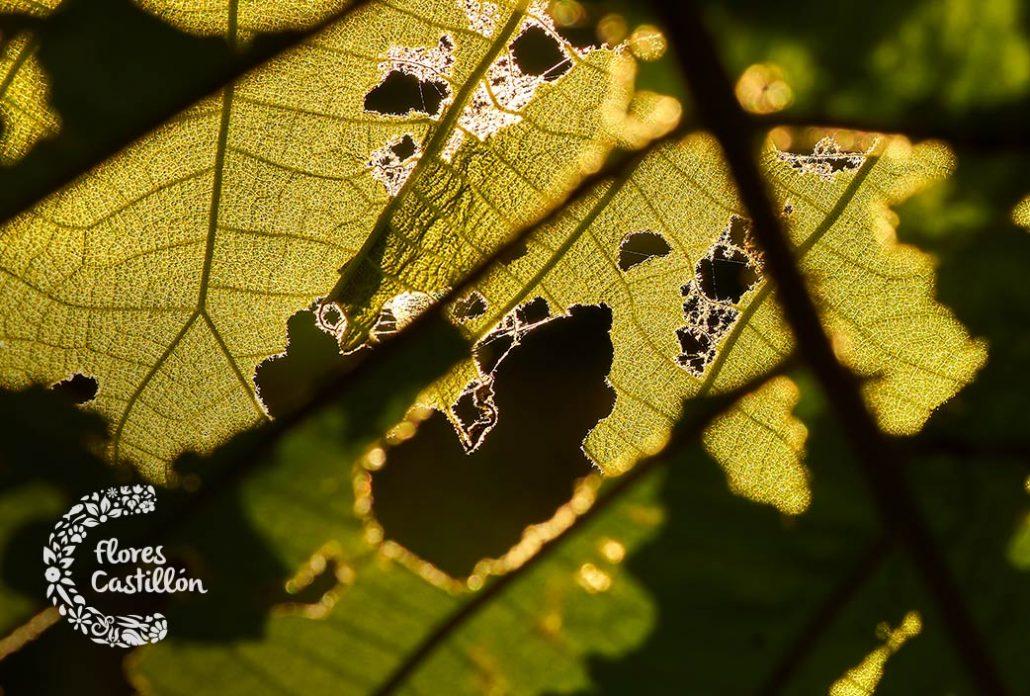 eliminar plagas de verano en el jardin