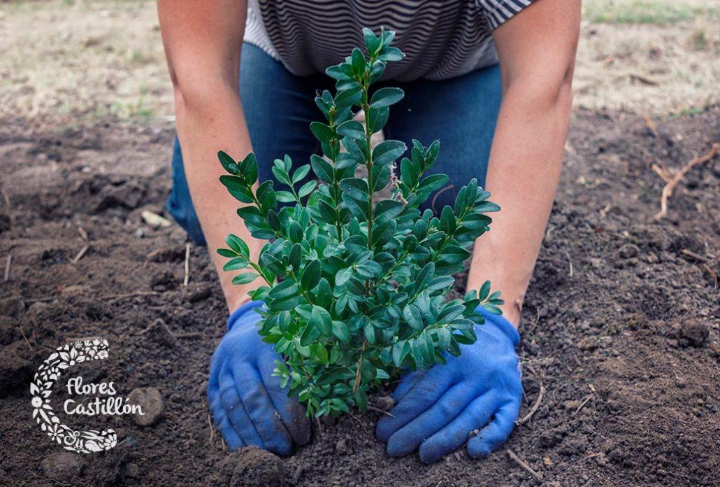 tipos de arboles para jardines pequeños