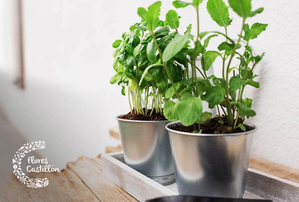 como cultivar plantas aromaticas
